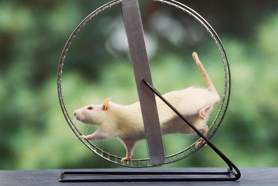 Kuriose Forschung: Schätzen Nager den Auslauf - oder sind sie bloß neurotisch?