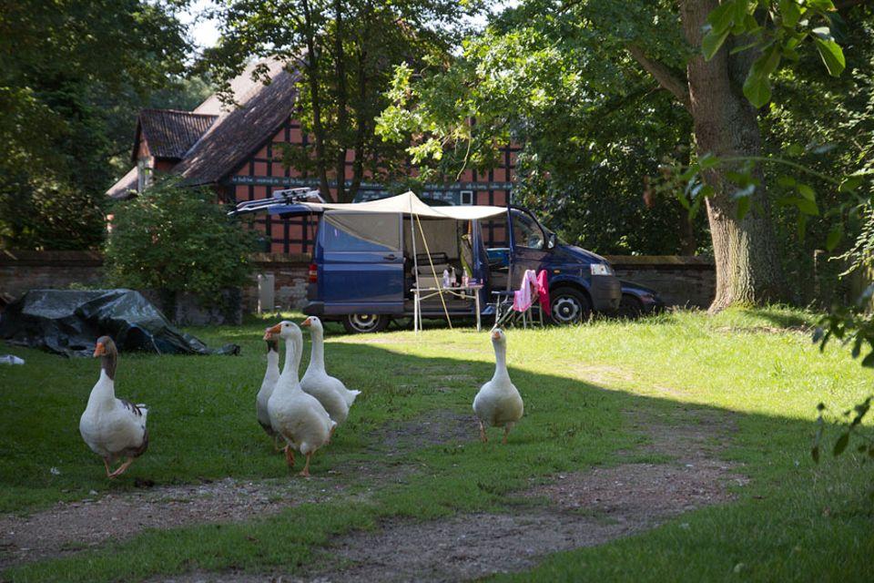 """Stellplatzführer """"Landvergnügen"""": Gänsemarsch! Auf dem Hof von Familie Bense im Wendland schaut das Federvieh auch mal beim Bulli vorbei"""