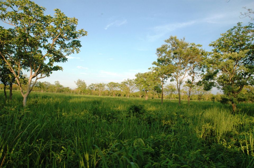 Indien: Landschaft in der Randzone des Manas Nationalparks