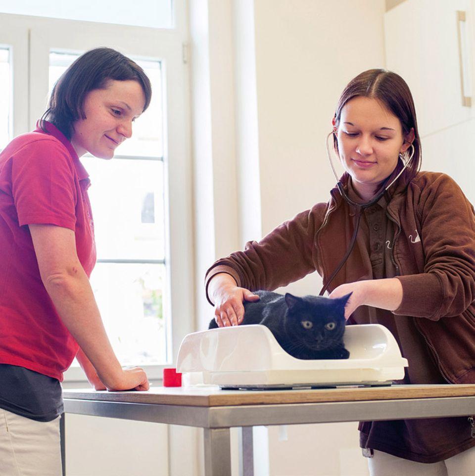 Tierklinik: Vor der Operation muss Angela Herrmann Musja wiegen, damit sie die Menge des Narkosemittels bestimmen kann