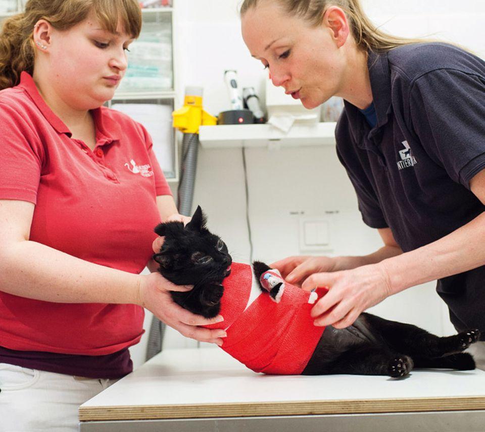 Tierklinik: Erst nachdem die Tierärzte den Tumor an ihrer Zitze entfernt und die Wunde vernäht haben, wacht sie wieder auf