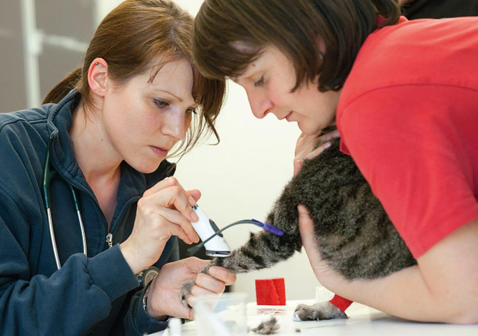 Tierklinik: Manchmal können die Tierärzte ihre Patienten nur mit dicken Lederhandschuhen anpacken, weil diese vor Angst kratzen und beißen. Nicht so bei Alisha: Sie ist dermaßen fiebrig und schlapp, dass sie das Blutabnehmen einfach über sich ergehen lässt