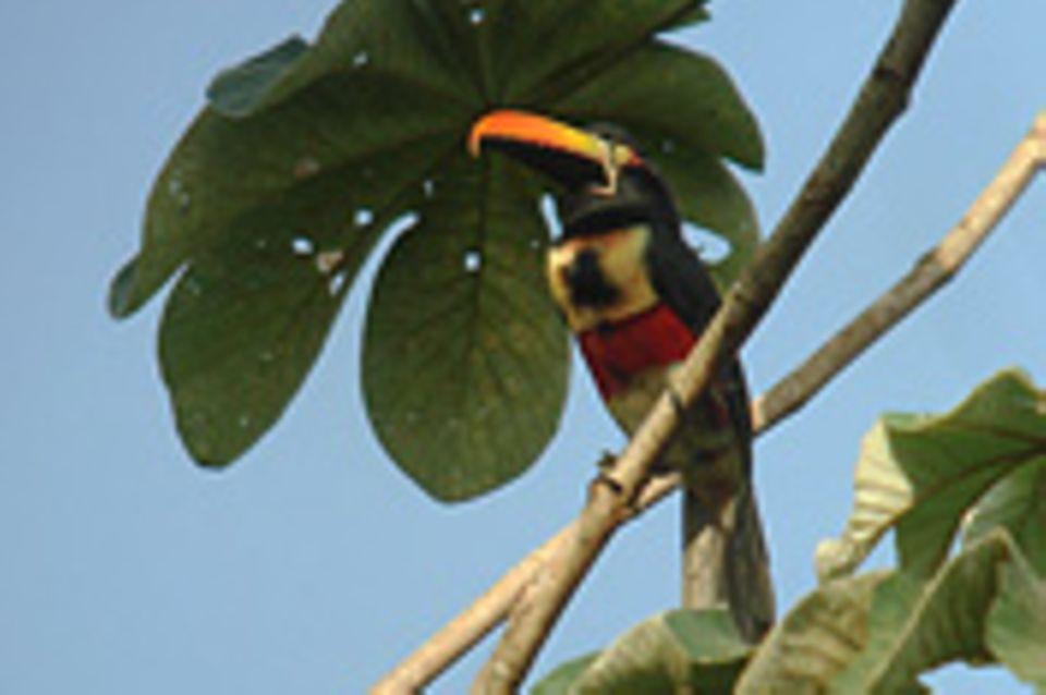 GEO-Stipendium: Mit den Augen eines Tukans