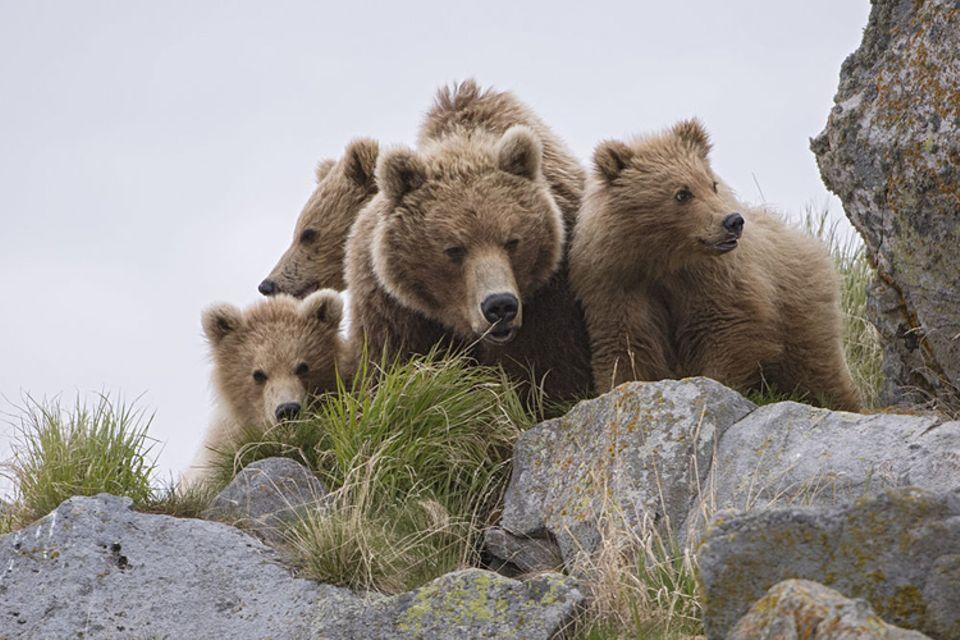 DVD: Unglaublich nah: Für die Dokumentation hat ein Kamera-Team mehrere Braunbären über Jahre hinweg begleitet