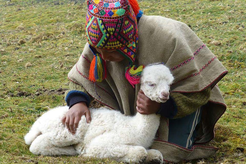 Der neunjährige Christobal übernimmt die Patenschaft für das letztgeborene Alpakafohlen des Jahres