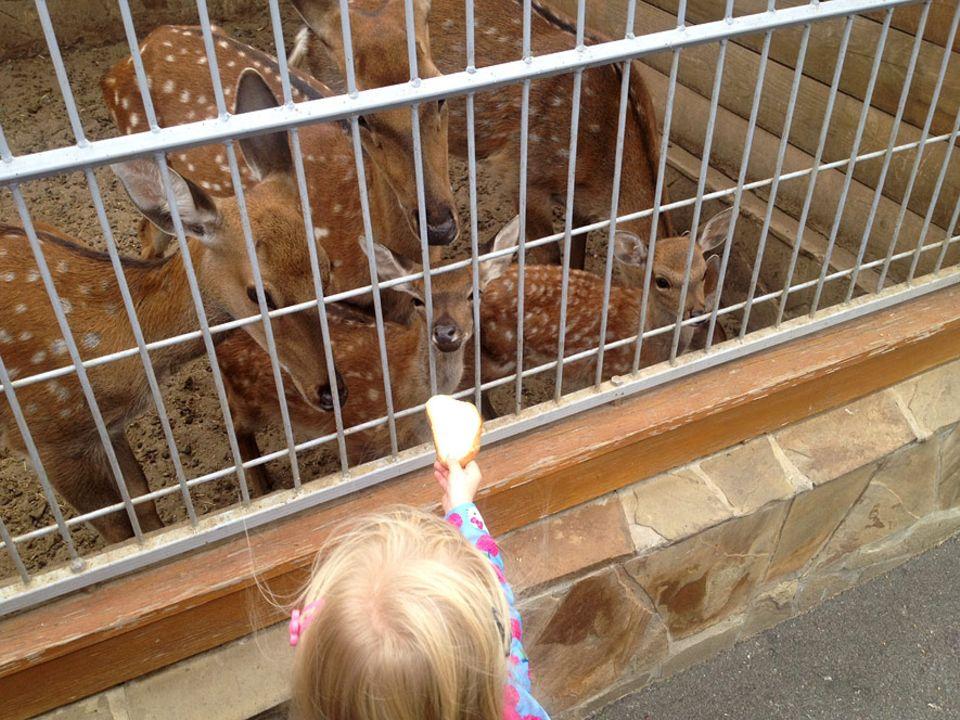 Skurriles Museum in Kiew: Auch ein privater Zoo gehört zu dem Gelände. Die Tiere sind nun auf die Futterspenden der Besucher angewiesen