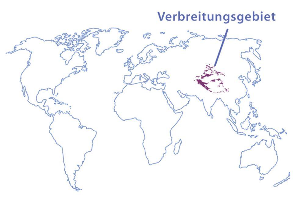 Tierlexikon: Verbreitungsgebiet des Schneeleoparden