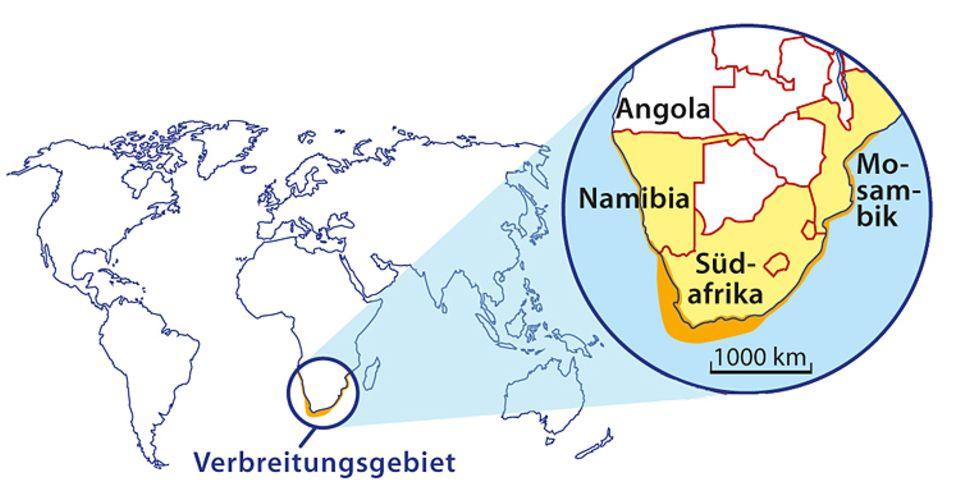 Tierlexikon: Verbreitungsgebiet des Brillenpinguins