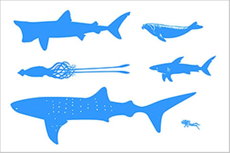 Meerestiere: Infografik: Die Giganten der Ozeane