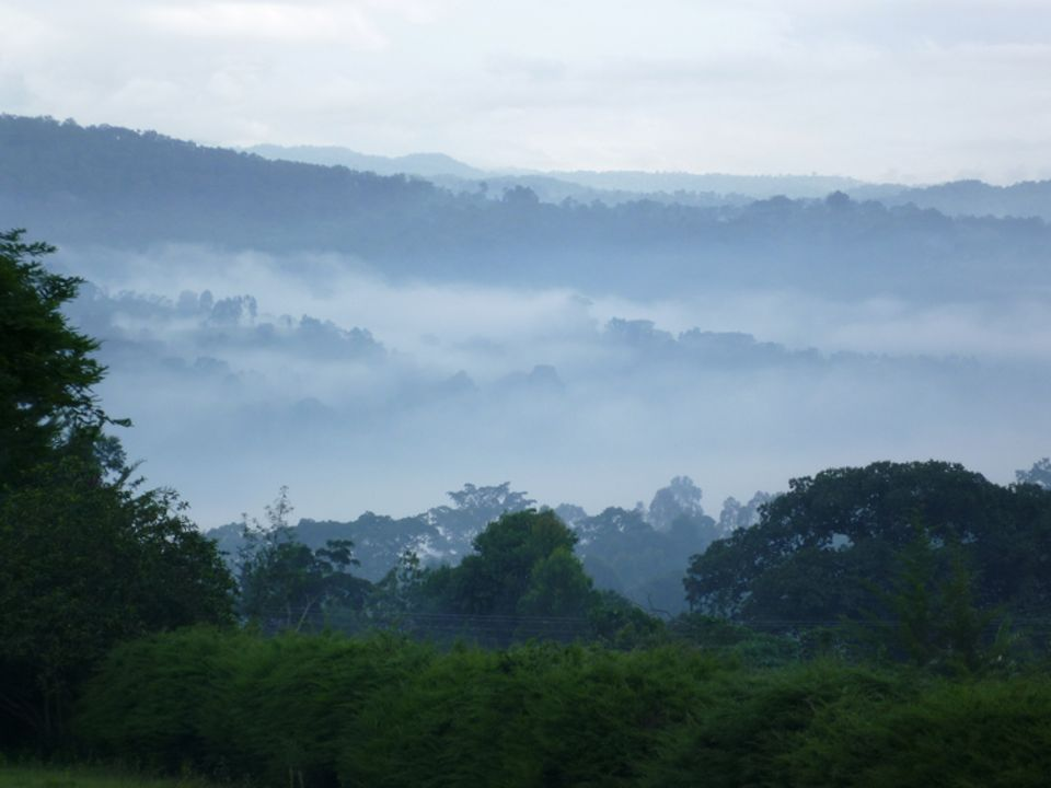 Äthiopien: Der Wald von Kaffa im Morgennebel