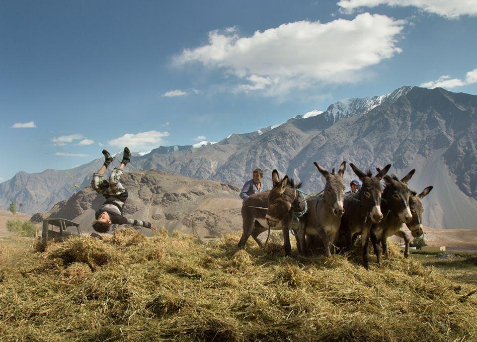 Abenteuer: Mähen mit Sense und Sichel, Dreschen mit Eseln - und dann durch Worfeln die Spreu vom Weizen trennen: Der Wandel in der Landwirtschaft ist im Pamir noch nicht weit fortgeschritten