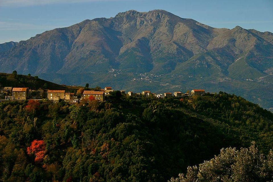 """Korsika ist berühmt für die """"Castagniccia"""" – die Region der Kastanienwälder. Seit über 6000 Jahren säumen die knorrigen Kastanienbäume die Berghänge"""