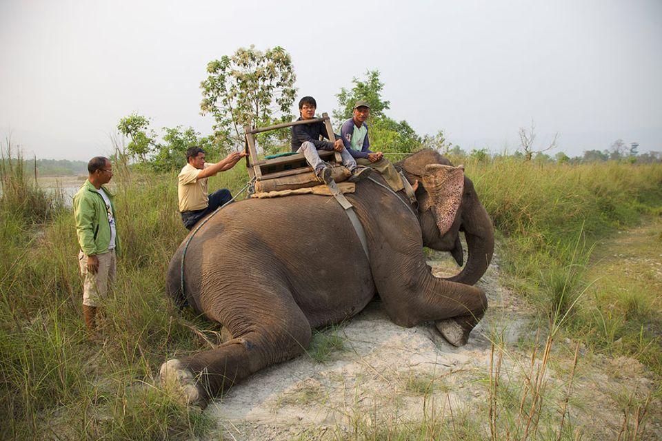 Nepal: Elefant Sano Chanchal eröffnet den Touristen von seinem Rücken aus den perfekten Blick in den Chitwan-Natiionalpark
