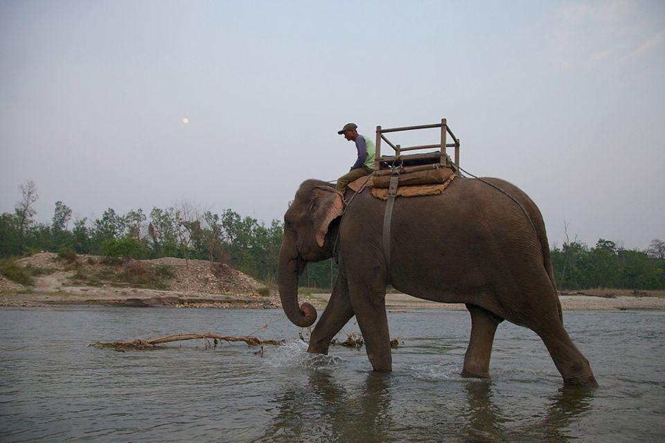 Nepal: Devnaryan und Sano Chanchal sind ein eingespieltes Team. Der Elefant gehört zur Familie und wurde von Devnaryan aufgezogen