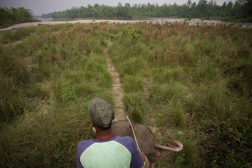 Nepal: Rund 900 Quadratkilometer misst der älteste Nationalpark Nepals. Dschungel, Grasland und Flüsse sorgen für eine beachtliche Artenvielfalt