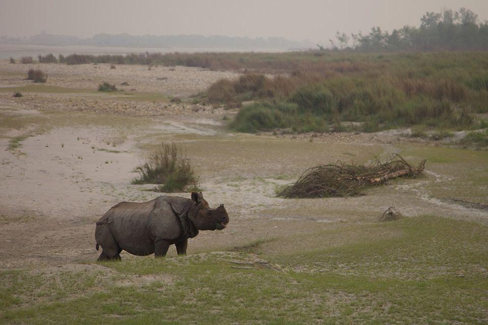 Nepal: Mehr als 100 Soldaten überwachen das Schutzgebiet der Panzernashörner, deren Population sich hinter dem Schutzwall langsam wieder erholt