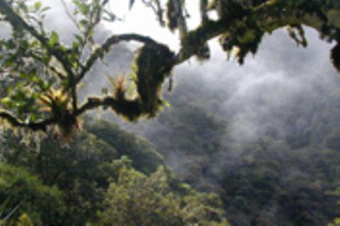 Ecuador: Wiederaufforstung und Schaffung von Einkommen in Cuellaje