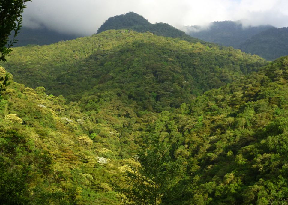 Ecuador: Auf den bewaldeten Berghängen der Intag-Region leben tausende Tier- und Pflanzenarten