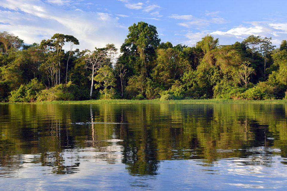 CO2-Speicher Wald: Schwächelnde CO2-Senke: Der Amazonas-Regenwald speichert weniger Kohlendioxid als gedacht. Tendenz: weiter abnehmend