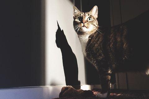 Verhalten: Katzen verlassen sich auf Menschen