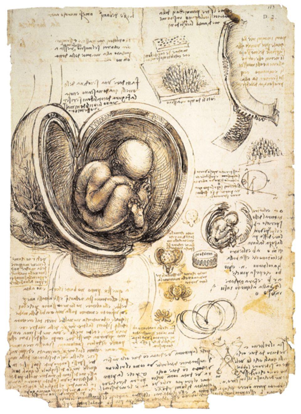 """Renaissance: """"Fötus im Uterus"""": Akribisch seziert Leonardo den menschlichen Körper, erforscht das Skelett, den Verlauf von Muskelsträngen, das Innere der Organe. Um 1510 skizziert der bald 60-Jährige eine geöffnete Gebärmutter mit einem, so schätzt er selbst, vier Monate alten Fötus"""