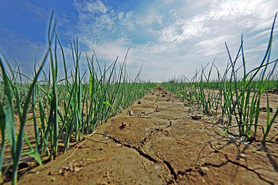 """3. Global Soil Week: """"Wir bräuchten eine zweite Erde"""""""