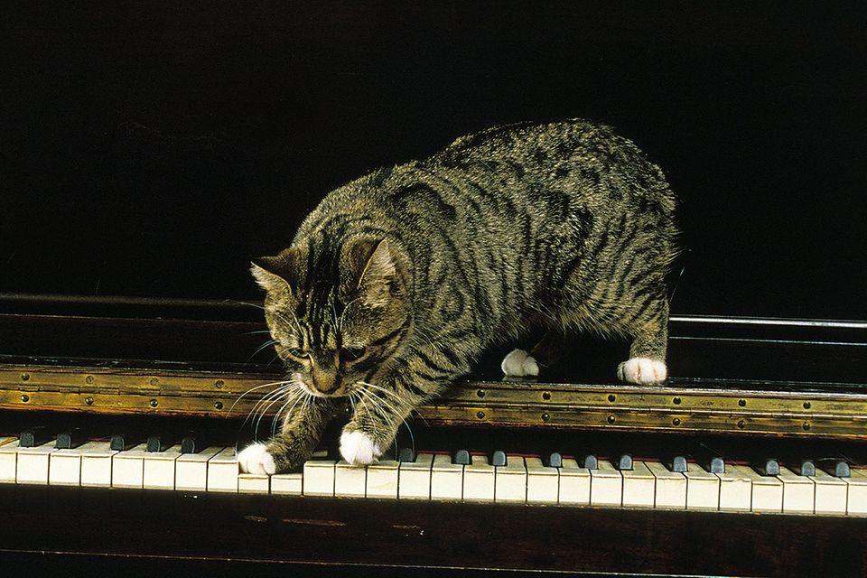 Kuriose Forschung: Diese Musik zieht Katzen an