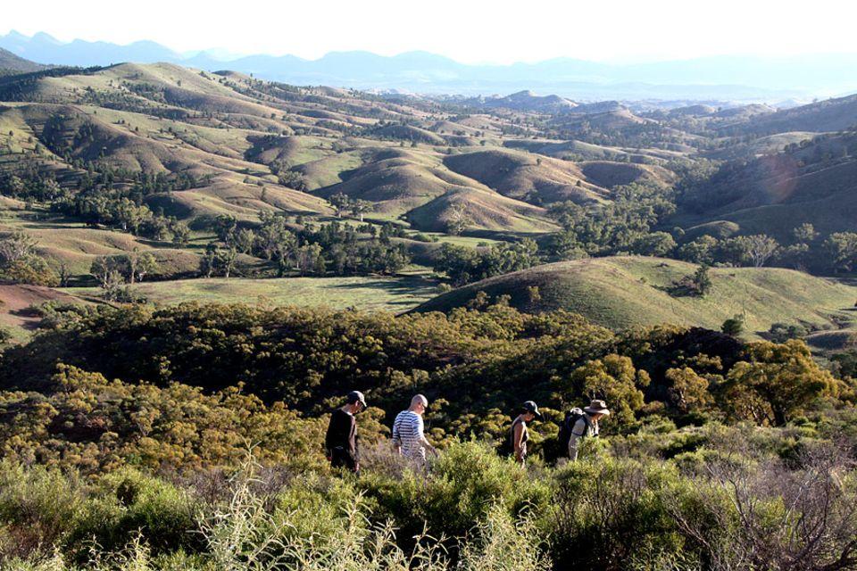 Flinders Ranges: Besuchern wird empfohlen sich in geschulte Hände zu begeben, um die Chance einer Sichtung zu erhöhen