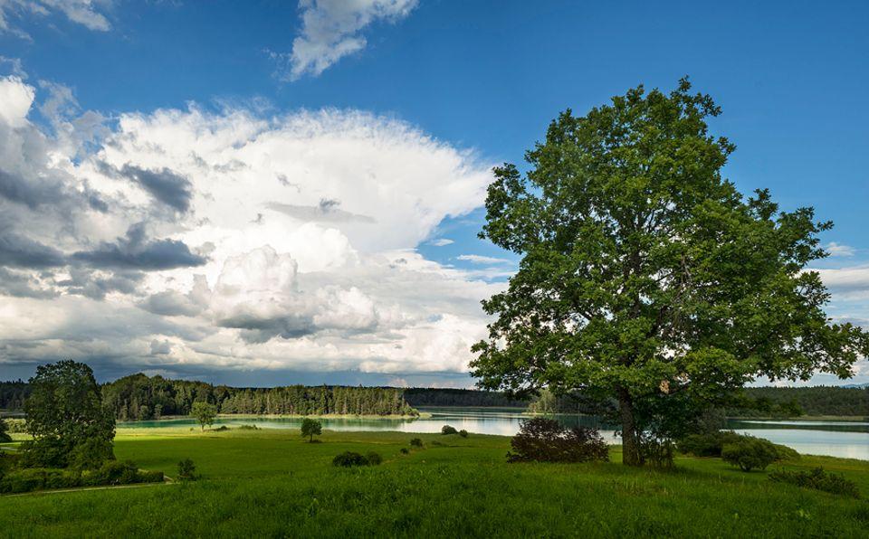 Ausflüge: Refugium für Seen-Süchtige: Gut 40 Kilometer südlich von München erstrecken sich die geschützten Osterseen