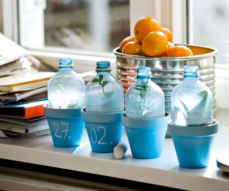 Upcycling: Praktisch upgecycelt: ein Flaschen-Gewächshaus