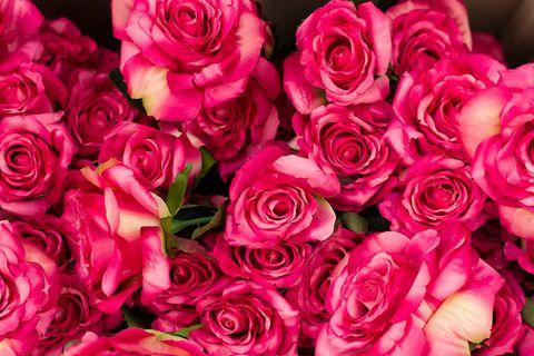 Genetik: Warum Rosen heute nicht mehr duften