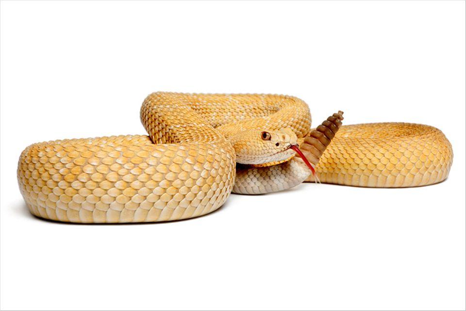 Sensible Schlangen: Bilder aus Wärme