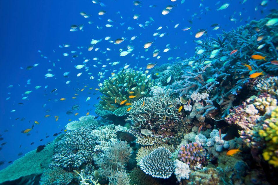 Great Barrier Riff: Das Wheeler Reef vor Townsville/Queensland ist eines von rund 2900 Einzelriffen, die sich auf einer Länge von 2300 Kilometern aneinanderreihen