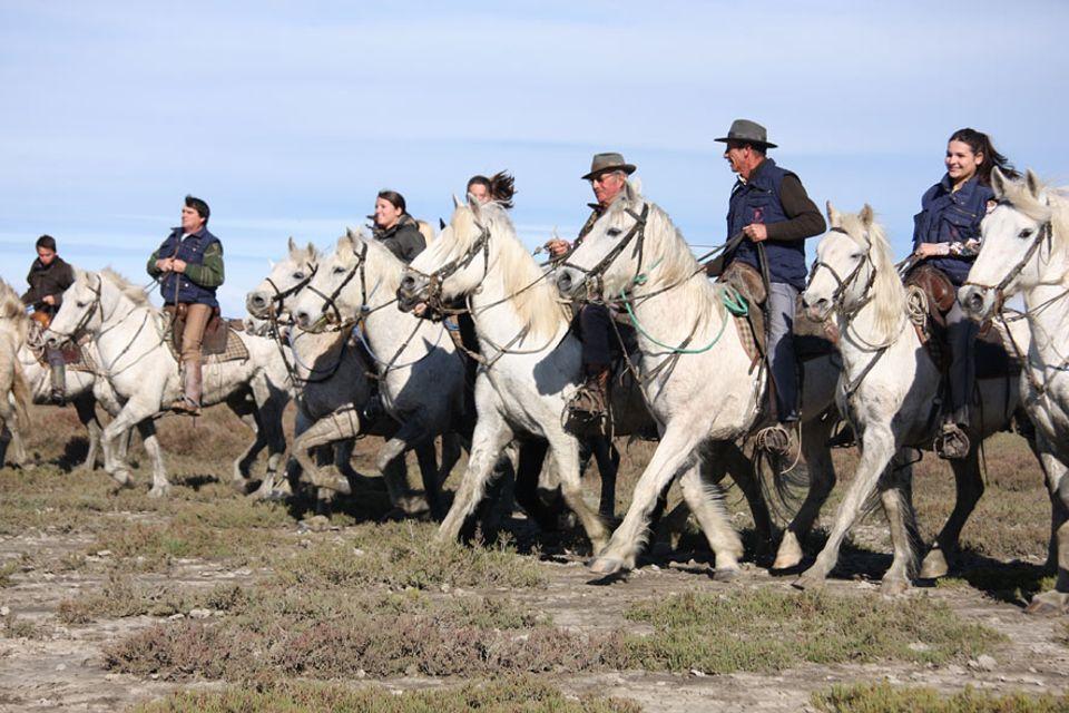 Im Süden Frankreichs, in der Nähe der Küstenstadt Saintes Marie de la Mer, liegt die Camargue. Eine wilde und ursprüngliche Natur, Herden weißer Pferde prägen das Bild der Landschaft