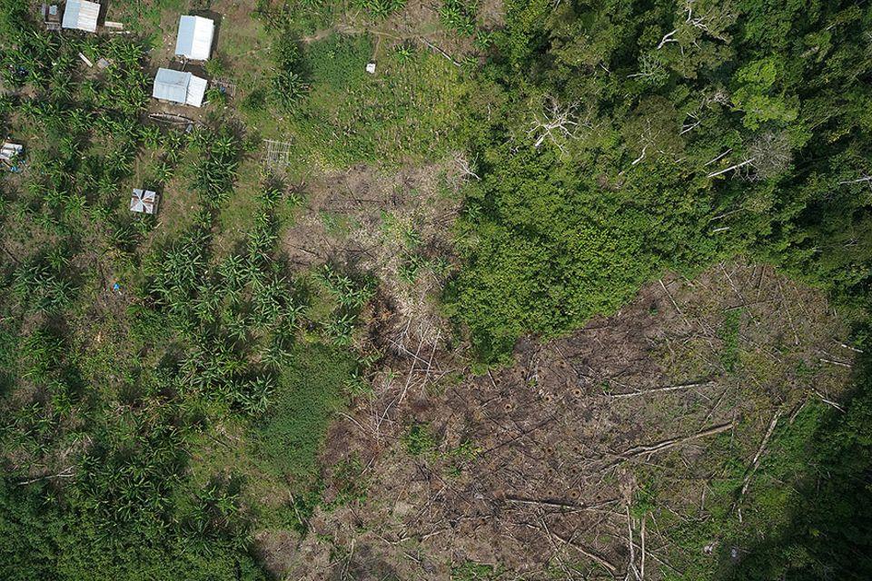 Peru: Illegale Abholzung im Amazones-Regewald: Diese Bäume mussten einer Mine weichen