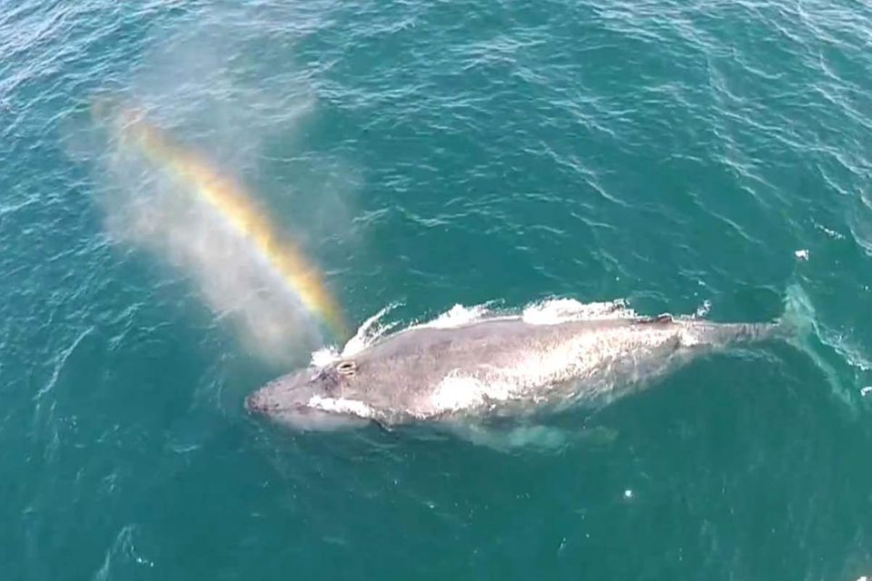 Kalifornien: Buckelwal sprüht Regenbogen