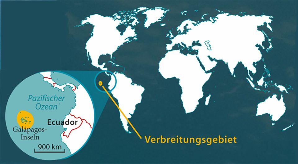 Tierlexikon: Etwa 50.000 Galapagos-Seelöwen leben auf und um die Galapagos-Inseln