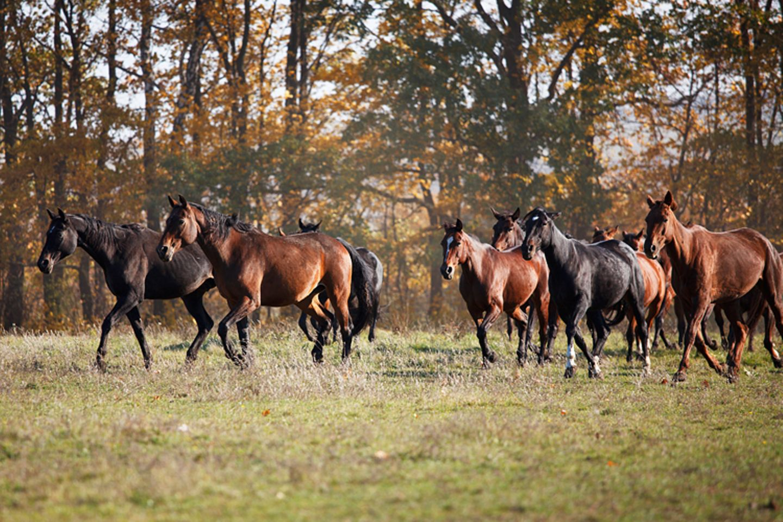 Tierlexikon: Mustangs stammen von Reitpferden aus dem 16. Jahrhundert ab