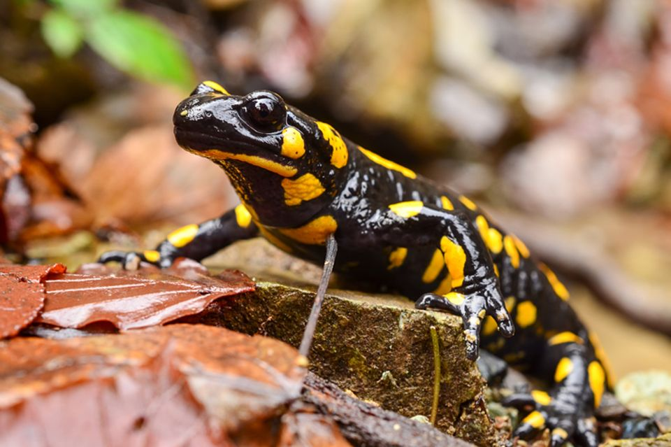 Tierlexikon: Reptilien und Amphibien