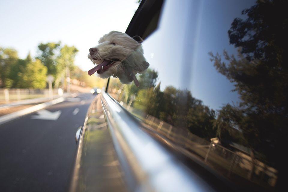 Tipps und Tricks: Wenn Haustiere reisen