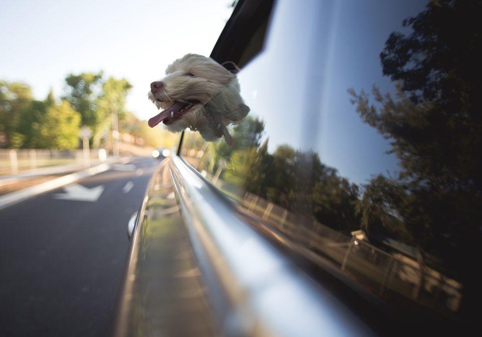 Tipps und Tricks: Für den artgerechten Transport des Haustieres ist der Fahrer verantwortlich