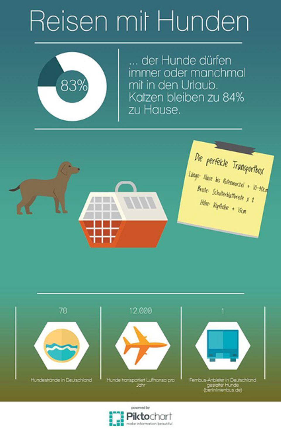 Tipps und Tricks: Infos und Tipps rund um das Reisen mit Hunden