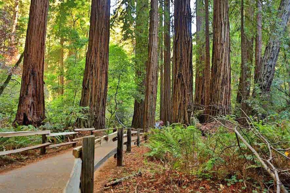 Ideen: Die Wege in den Muir Woods sind nur teilweise beschriftet, daher unbedingt eine Karte mitnehmen!