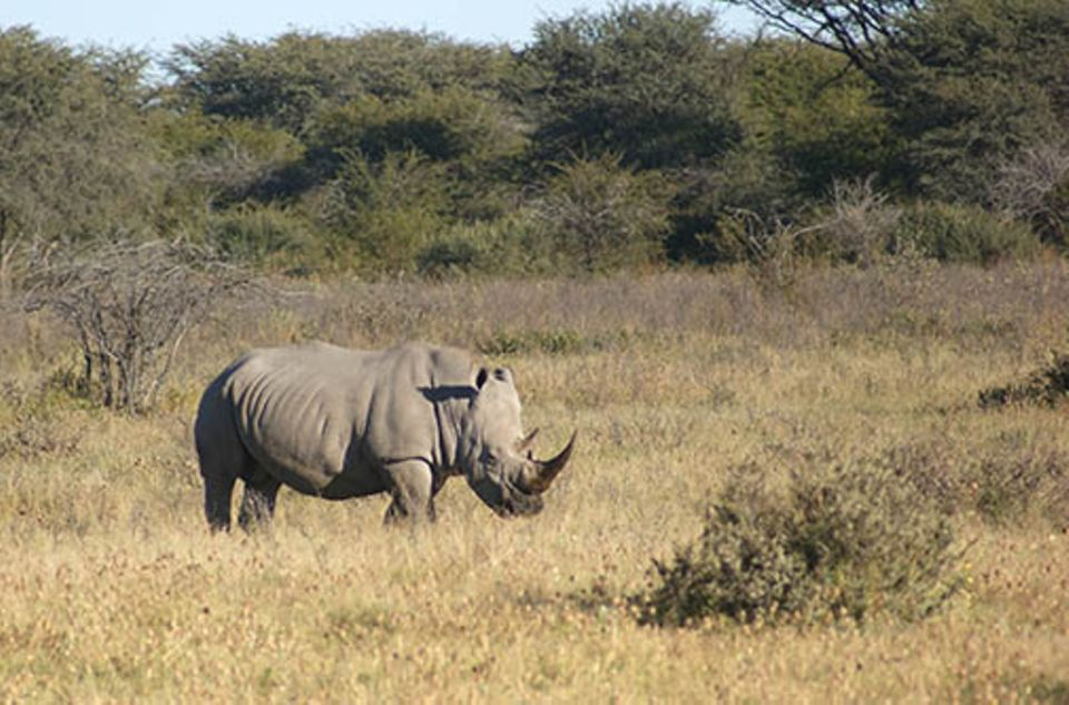 Südafrika: Etwa alle acht Stunden wurde im vergangenen Jahr in Südafrika ein Nashorn getötet