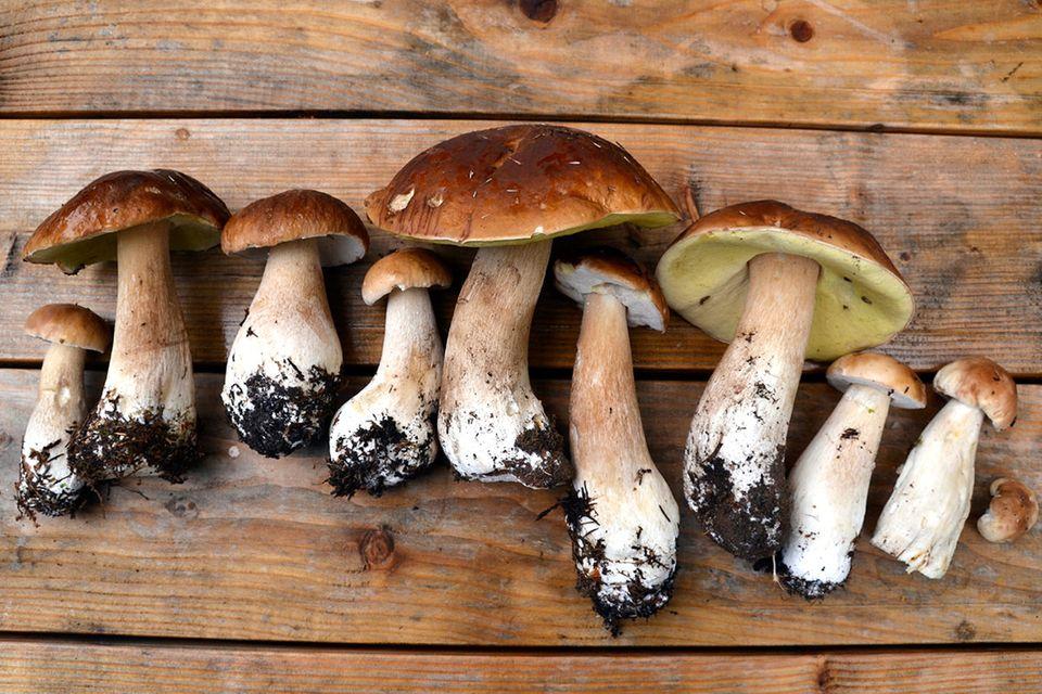 Wie wir Pilze nutzen: Tausendsassa aus dem Untergrund