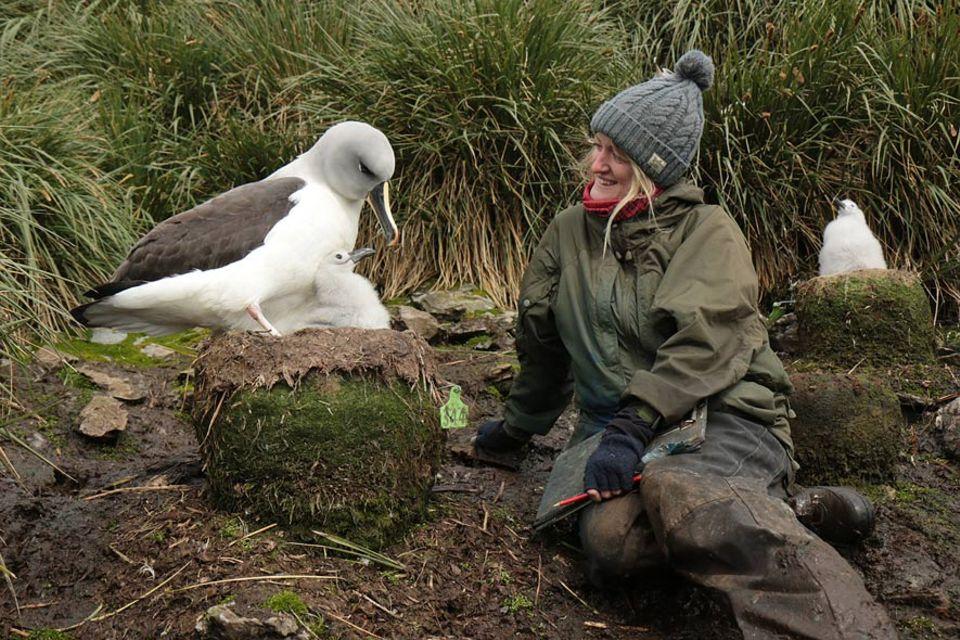 Die kleine Insel Bird Island nahe der Abtarktis ist ein Paradies für Hundertausende Seevögel. Nur wenige Menschen dürfen die Insel betreten. Einer von ihnen – die Biologin Lucy Quinn