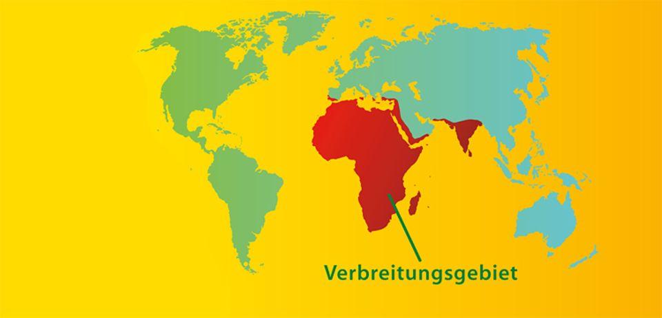 Tierlexikon: Chamäleons leben hauptsächlich in Afrika