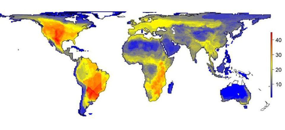 Weltkarte: Diese Karte zeigt die Verbreitung von Säugern schwerer als 45 kg pro 100x100 km in einer Welt ohne Menschen