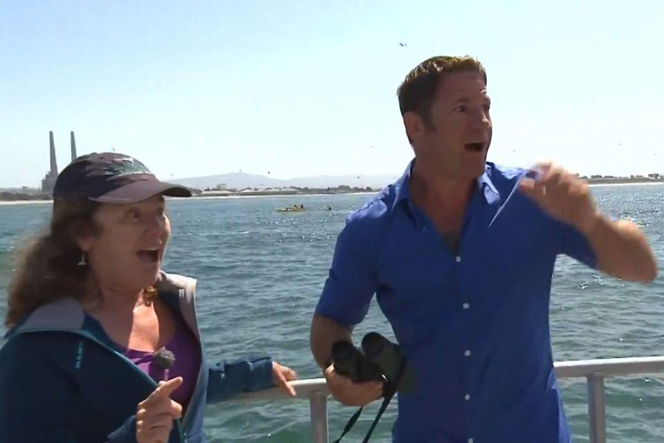 BBC-Sendung: Blauwal unterbricht Live-Interview