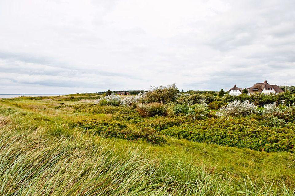 Föhr: Typisch friesisch: ein Reetdachhaus auf der Insel Föhr und auch die Inselsprache erobert sich seinen Platz zurück. Sie ist Pflichtfach in der Schule, damit sie nicht verloren geht